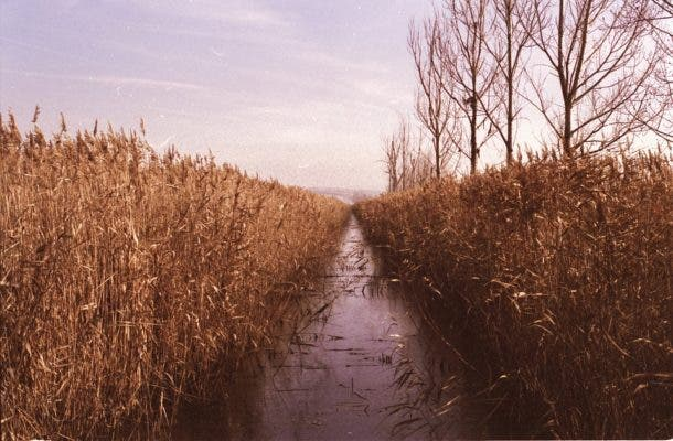 crop-water