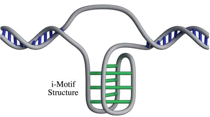The i-motif DNA structure. Credit: Garvan Institute of Medical Research.