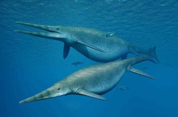 Illustration of Shonisaurus, a 69-foot ichthyosaur similar to the newfound ichthyosaur. Credit: NOBUMICHI TAMURA.