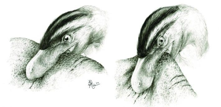 This illustration shows puncture-and-pull feeding in predatory theropod dinosaurs, based on the results of the researchers' microwear analysis and finite element analyses. Credit: Sydney Mohr.
