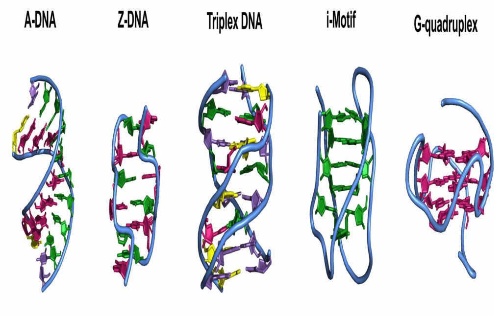 Various alternative DNA shapes.