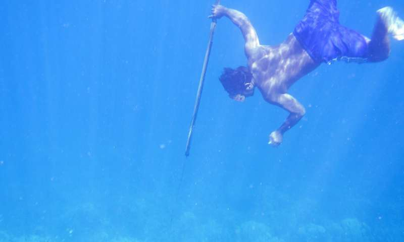 A Bajau diver hunts fish underwater using a traditional spear. Credit: University of Cambridge.