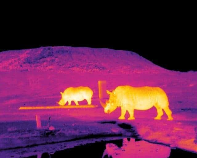 Heat-rhinos.