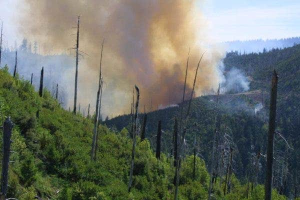 The 2002 Biscuit Fire reburns the area of the 1987 Silver fire. Credit: Thomas Link.