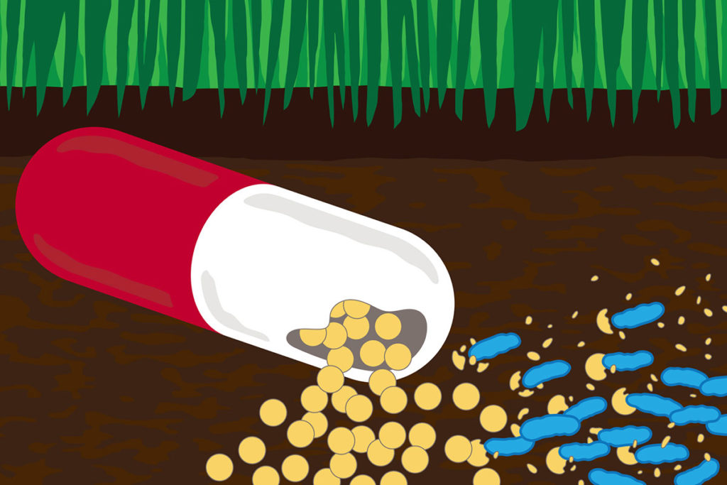 Researchers have figured out how some soil bacteria turn antibiotic drugs into food. Credit: Michael Worful.