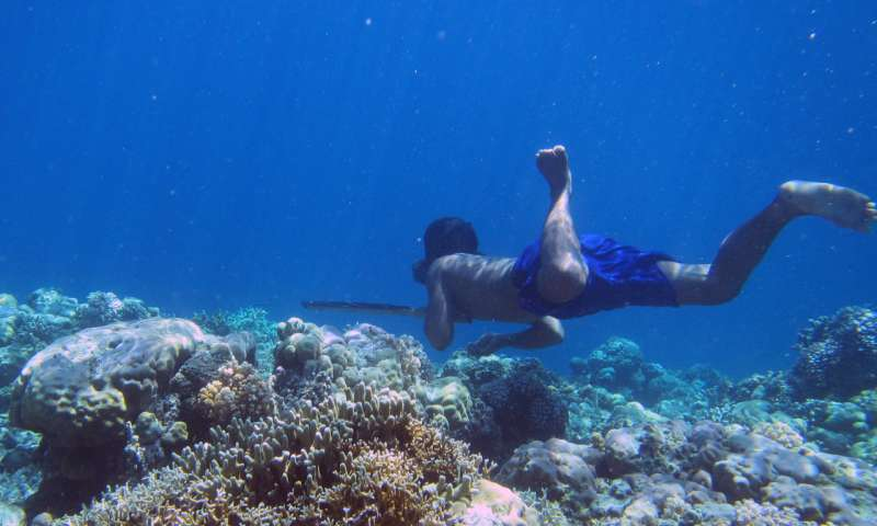 In this photo, a Bajau diver hunts fish underwater using a traditional spear. Credit: Melissa Ilardo.