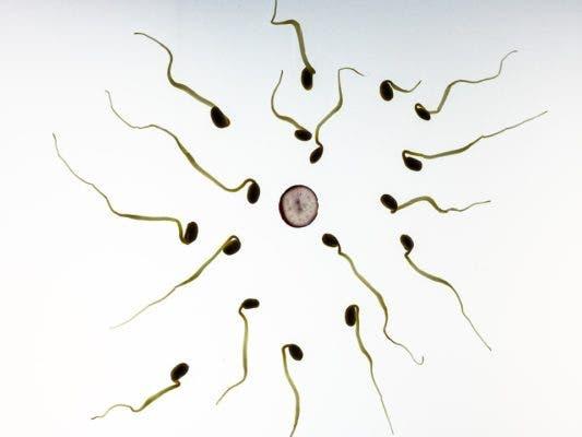 Sperm plants.
