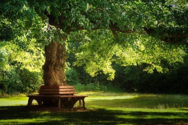 Tree park.
