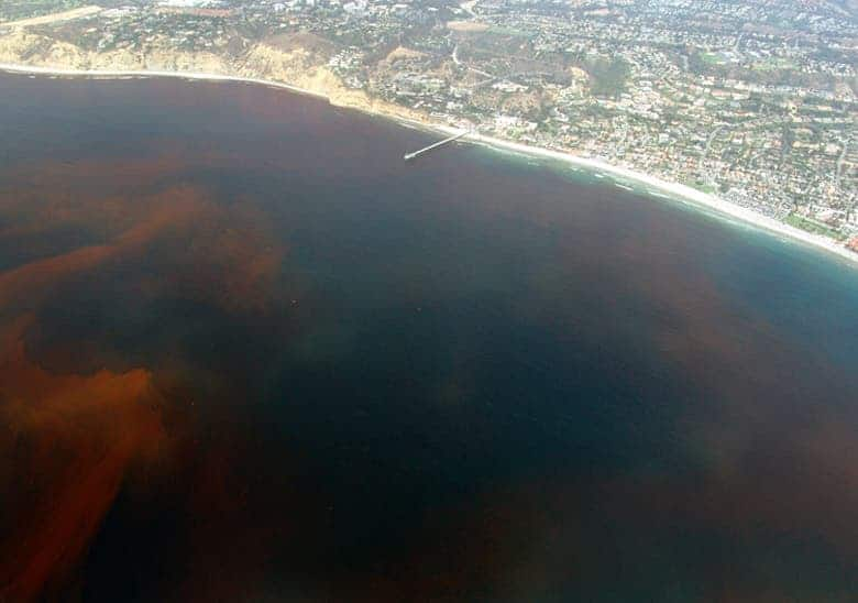 La-Jolla-Red-Tide.
