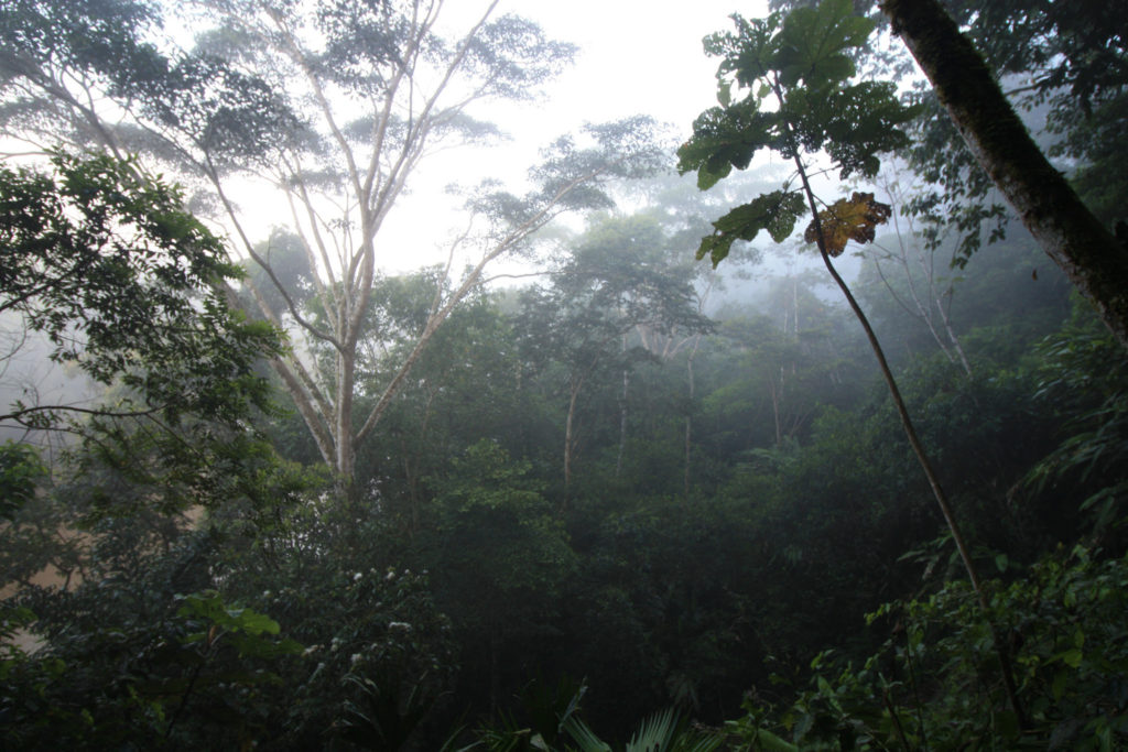 Photos from within the Amazon Rainforest in Tena, Ecuador. Credit: Jay, Flickr.