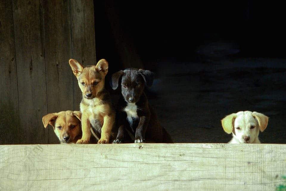 Puppies.