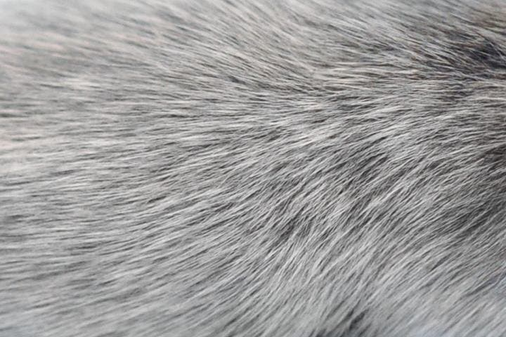 Scientists discover another reason for why hair turns gray