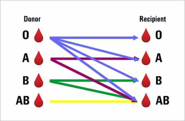 What is the most common blood type?