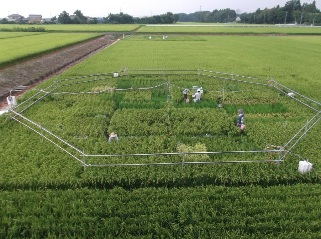Experimental rice field near Tsukuba, Japan.Dr. Toshihiro HASEGAWA (National Agriculture and Food Research Organization of Japan).