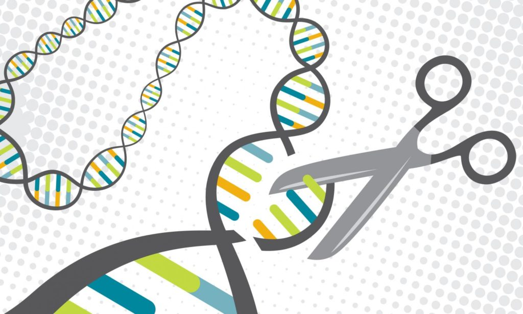 A CRISPR protein targets specific sections of DNA and cuts them. Credit: Univ. of Texas at Austin.