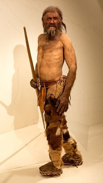 A reconstruction of Ötzi. Credit: Wikimedia Commons.