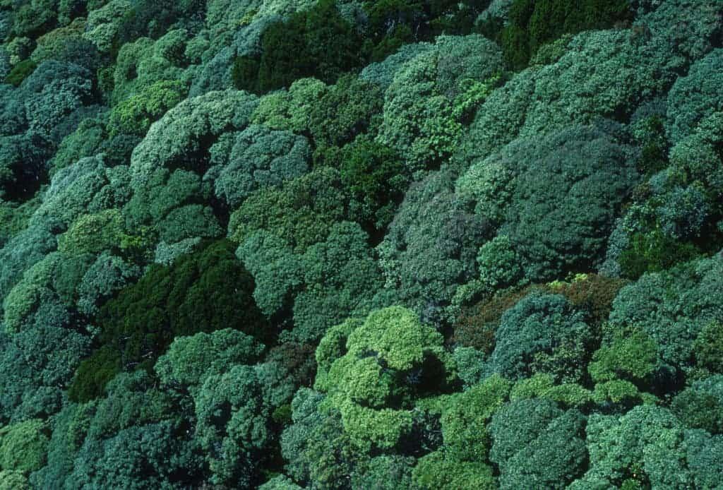 Rainforest canopy.