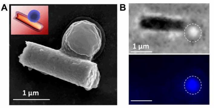 Nanobot.