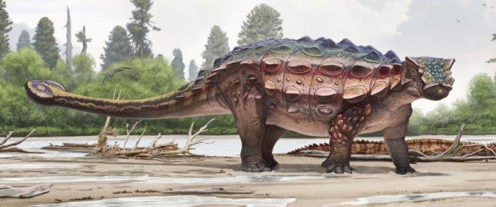 Ankylosaur art.