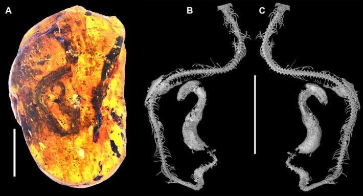 Snake fossil.