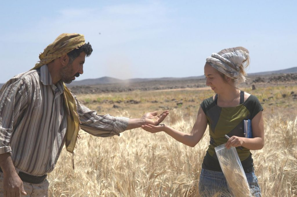 Dr. Amaia Arranz-Otaegui and Ali Shakaiteer sampling cereals in the Shubayqa area. Credit: Joe Roe.