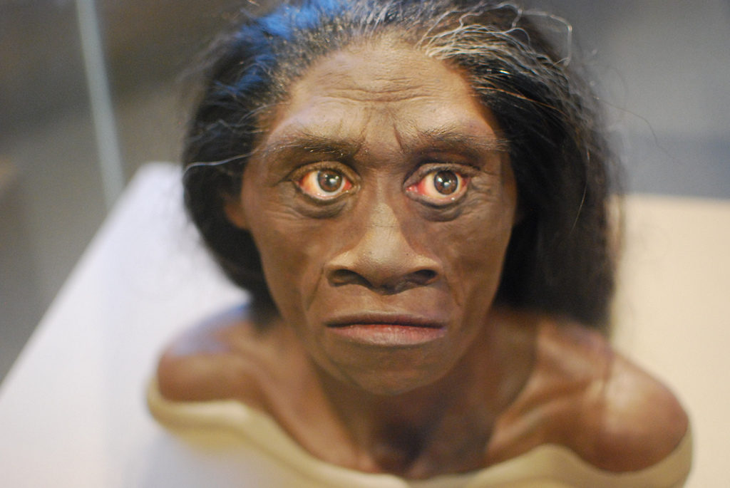 Reconstructed bust of H. Floresiensis. Credit: Karen Neoh, Flickr.
