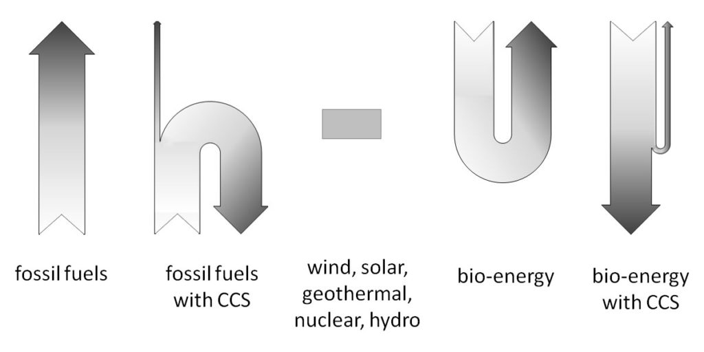 Carbon flow diagram.