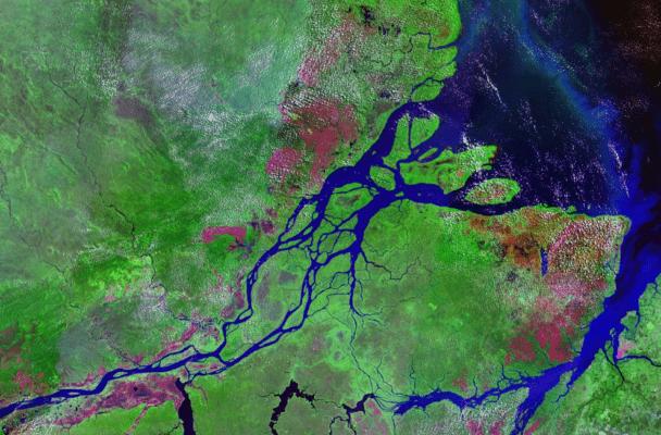 Amazon Estuary.