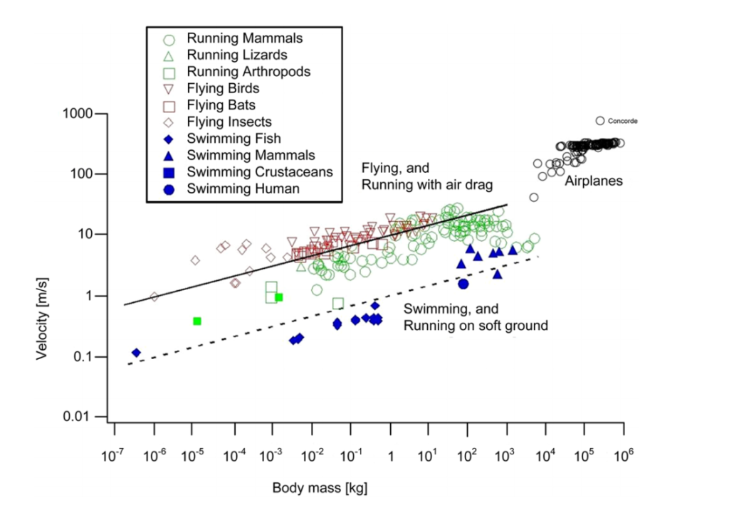 Animal speed-mass data (fiers, runners, swimmers). Credit: Bejan et al, Scientific Reports.