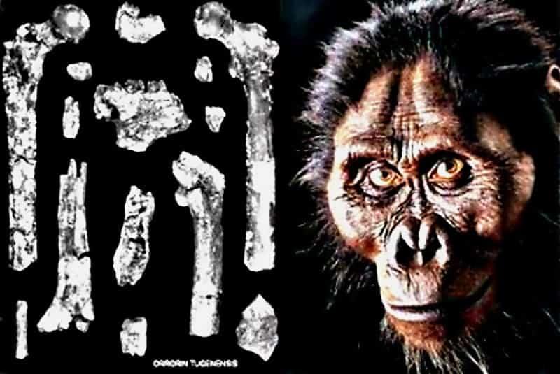 The Timeline Of Human Evolution