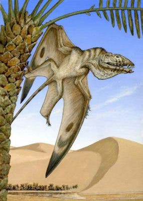 An artist's impression of a newly discovered pterosaur species. Credit: Michael W. Skrepnick.