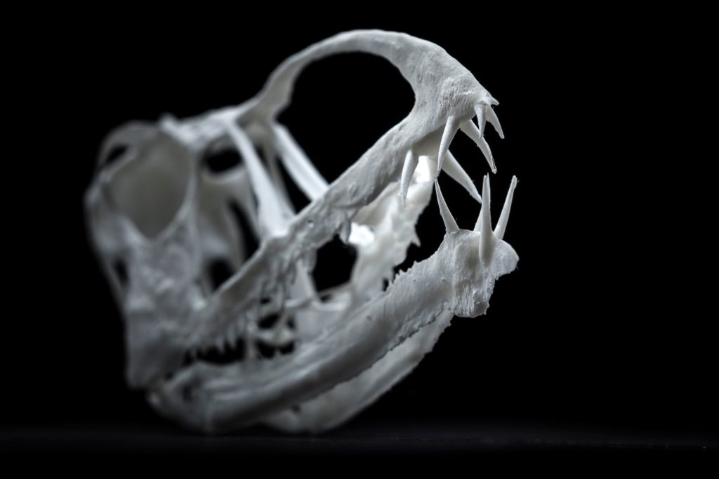 Another view of the 3-D printed skull. Credit: Nate Edwards, Brigham Young University.
