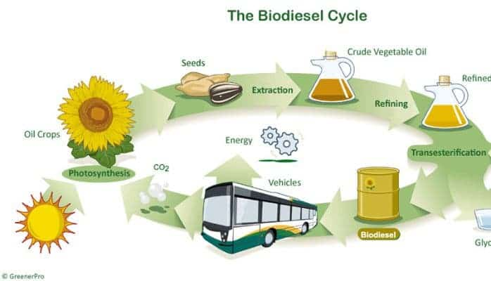 Biofuel cycle.