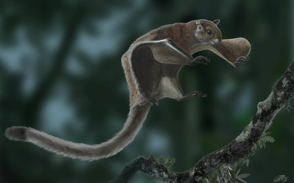 Artistic reconstruction of the extinct flying squirrel Miopetaurista neogrivensis. Credit: Oscar Sanisidro.