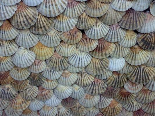 Shellfish.
