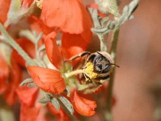 Bee Grand Staircase-Escalante National Monument.