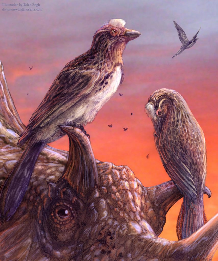 Artist impression of Mirarce eatoni perched on the horns of the ceratopsian dinosaur Utahceratops gettyi. Both animals were alive in Utah during the Late Cretaceous (75 million years ago). Credit: Brian Engh.