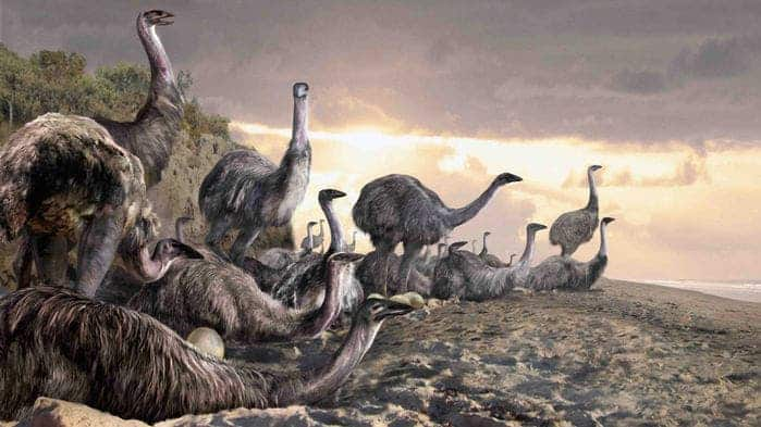 Giant elephant birds may have coexisted with people for millennia. VELIZAR SIMEONVSKI/THE UNIVERSITY OF CHICAGO PRESS, CHICAGO.