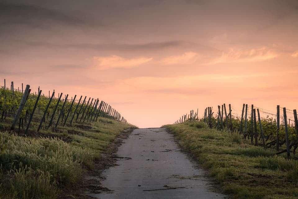 Pesticide build-ups are contaminating Europe's fields