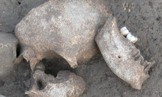 Conifer resins identified on Iron Age skulls indicate that a gruesome ancient Celtic practice may be real. Credit: Fouille Programmée Le Cailar.