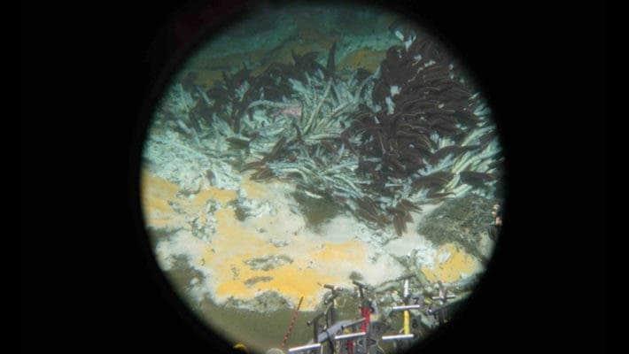 Seafloor Alvin Image.