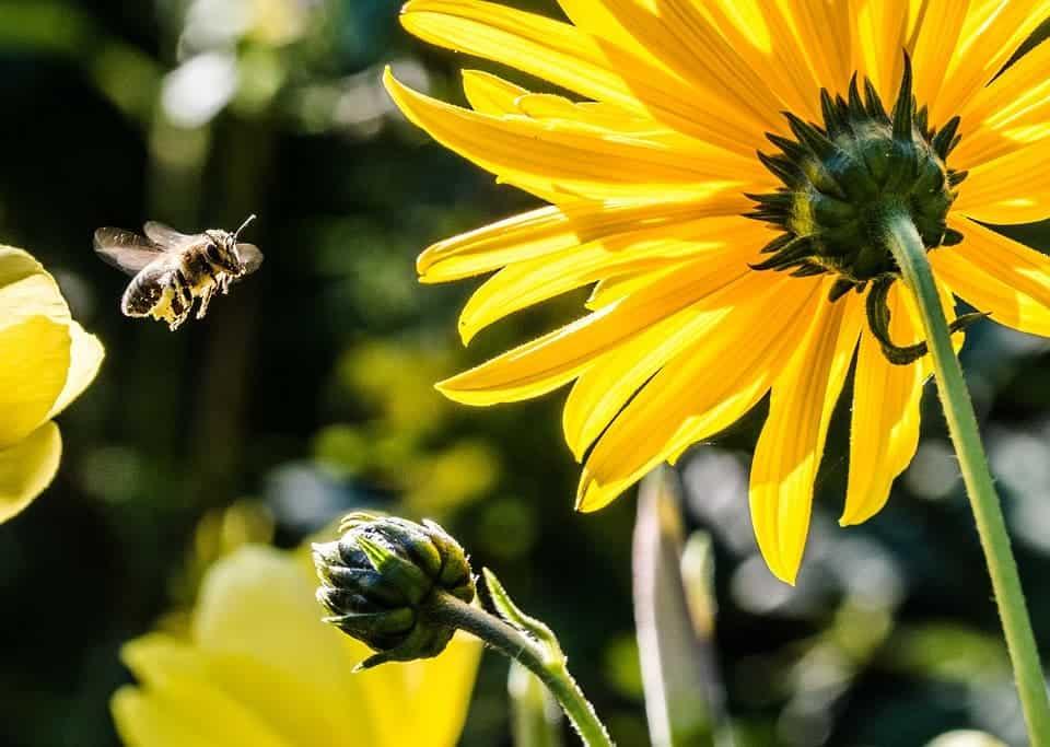 Bee in approach.