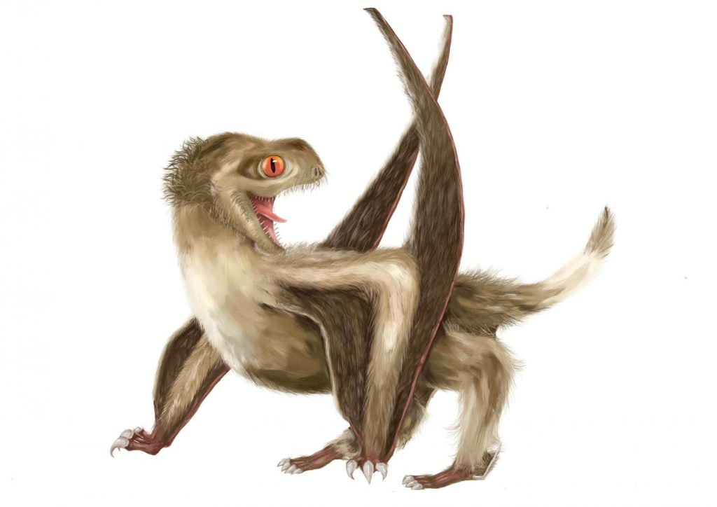Artist impression of Daohugou pterosaur showing four different types of feathers covering the head, neck, body, and wings. Credit: Yuan Zhang.