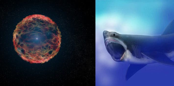 A supernova explosion may have triggered radiation exposure in Megalodon and countless other ancient marine megafauna. Credit: NASA Goddard Photo/Wikimedia Commons.