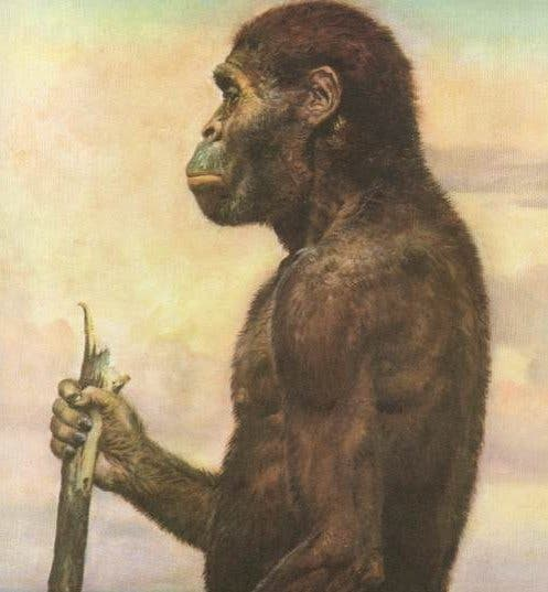 Australopithecus Africanus. Credit: Wikimedia Commons.