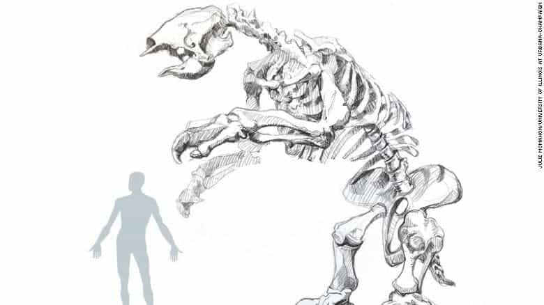 Illustration of giant sloth skeleton alongside human for scale. Credit: the University of Illinois at Urbana-Champaign.