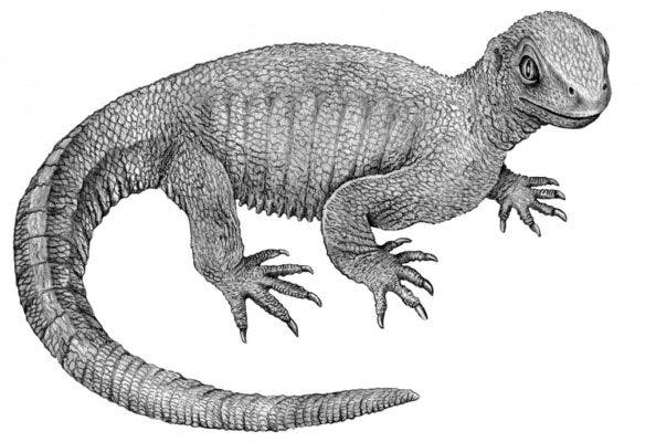 Pappochelys rosinae lived during the Triassic Period, about 240 million years ago. Credit: Wikimedia Commons.