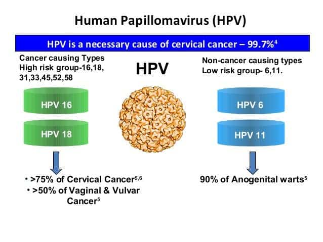Hpv cancer how long. How long does the HPV vaccine last? cancer mediastinal simptome
