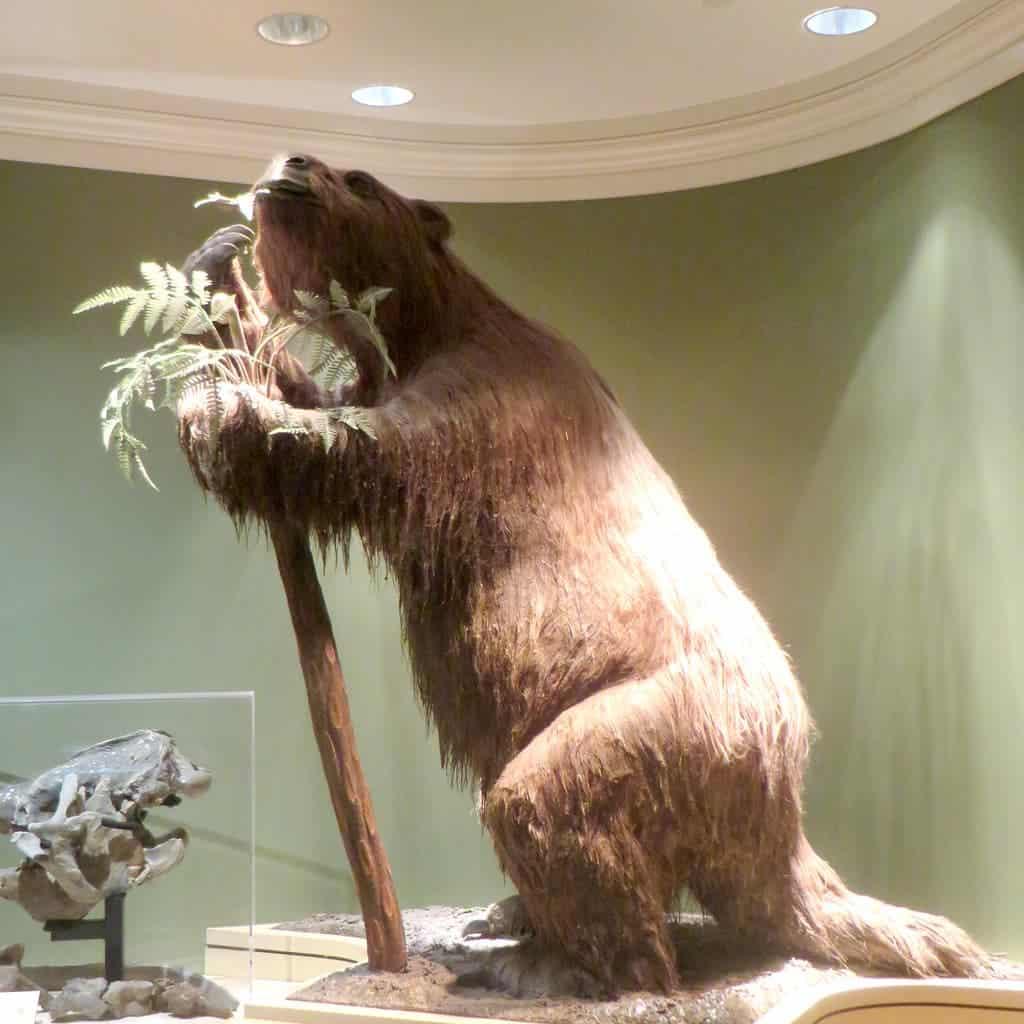 Giant sloth.