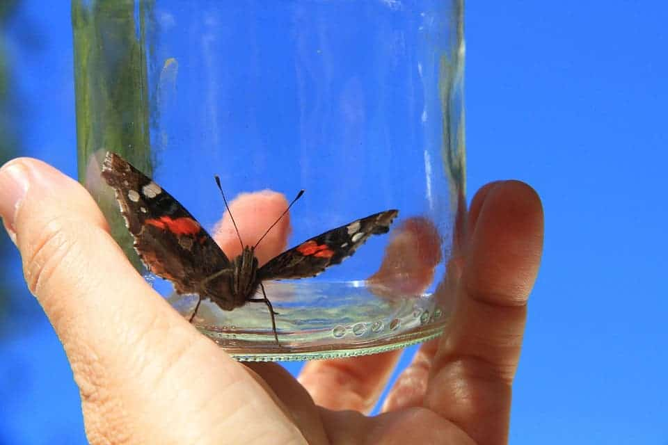 Butterfly in a jar.